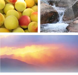 熊野の山々に囲まれた富田川の水を使用!